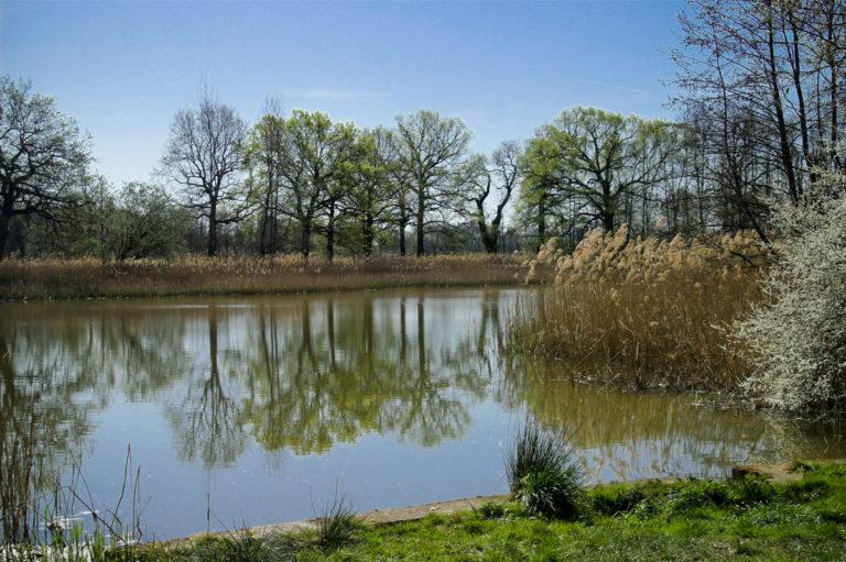 Oberlausitzer Heide & Teichlandschaft