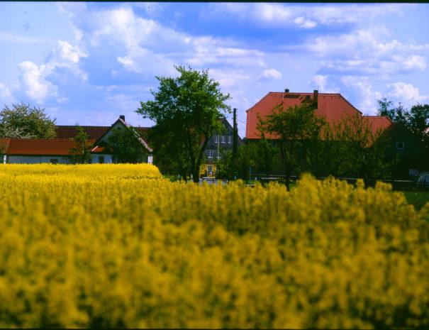 Blick auf das Dorf Wartha mit Rapsfeld